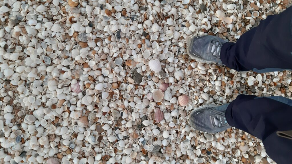 concheiro praia do cassino